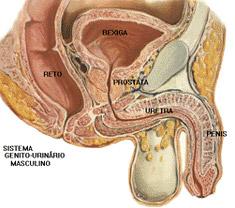 nodulo na prostata benigno Krónikus prosztatitis Több mint 10 éve